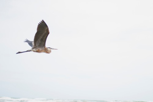 Crane taking flight